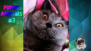 Funny Animals #3 / Смешные животные #3