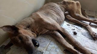 Rescue a Poor Dog with Severely Mouth Cancer and Had Given Up Hope Getting Recover