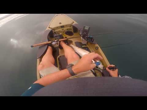 La Jolla CA First Legal White Sea Bass