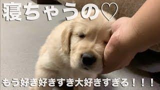 ツイッター https://twitter.com/goldenret6 おたよりはこちらへ shohei...