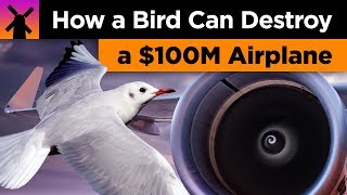 How a Bird Can Destroy a $100 Million Airplane