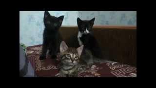 Подарим троих котят!!!