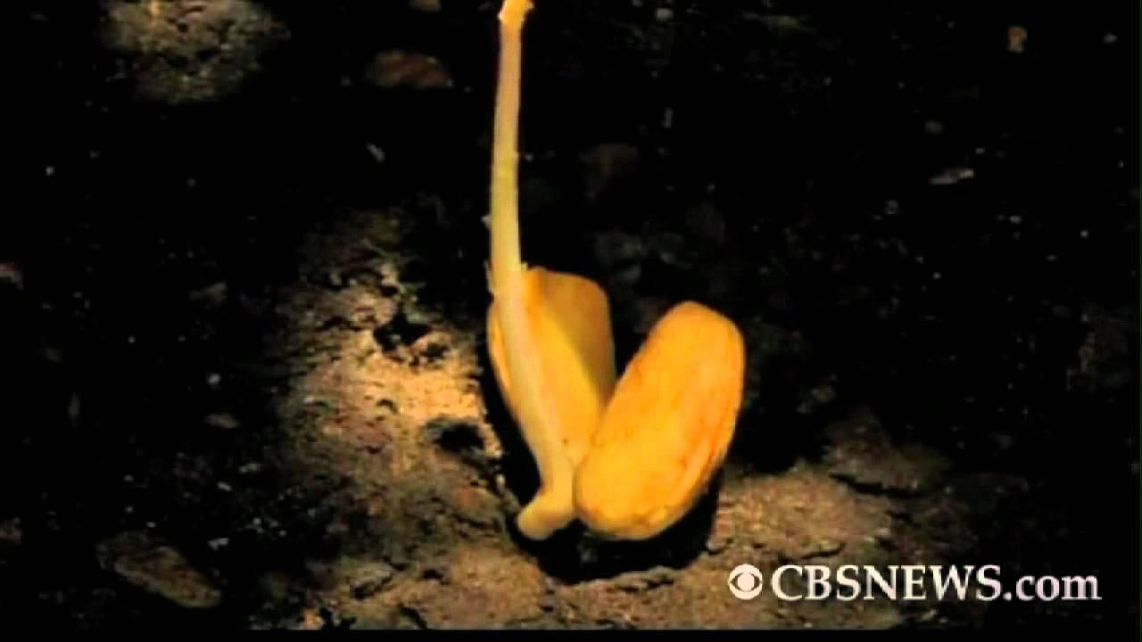 Acorn becomes oak tree in timelapse video - YouTube