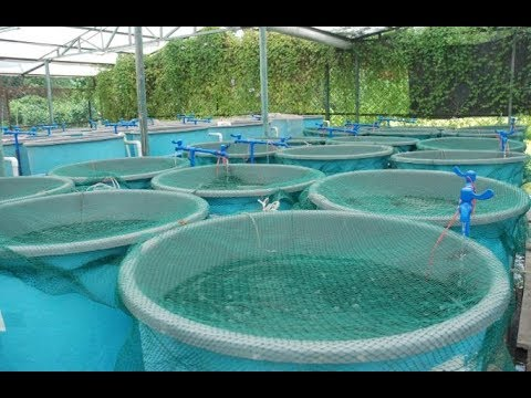 The Game Changer For Fish Farming In Kenya