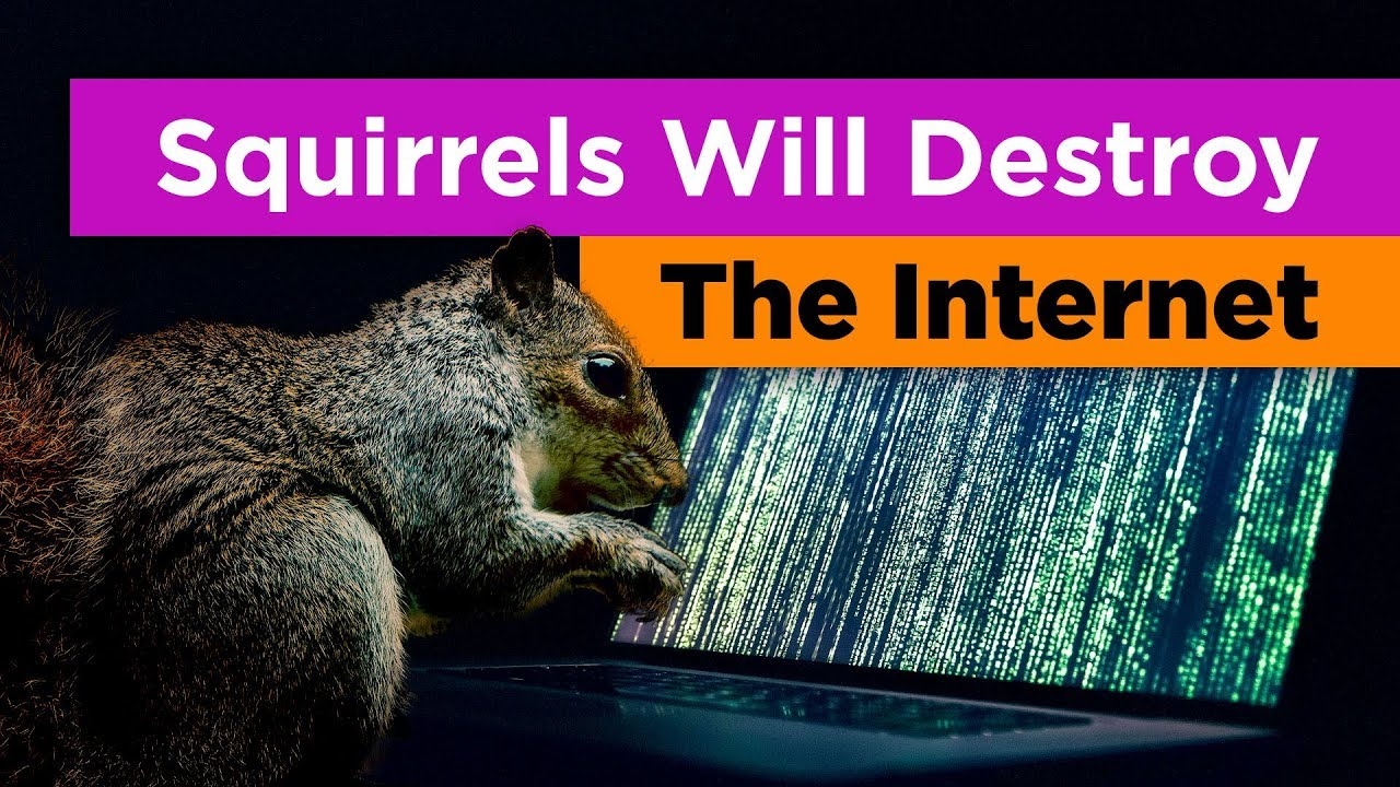 why-squirrels-are-the-greatest-threat-to-the-internet-feat-tierzoo