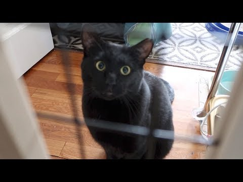 Boo Day 157 - Cats Caught On Camera By Boo's Door - Training And Socializing A Feral Cat
