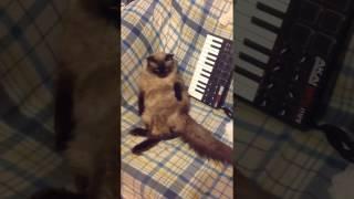 кошка сидит на жопе! что делать!?