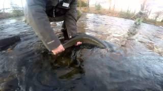 steelhead salmon fishing pulaski river oswego river 11 9 2014