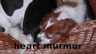 Puppy Farms; Suffering For Dogs, Heartbreak For You