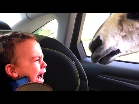 ANIMALS SCARING PEOPLE! Funny Animal Videos