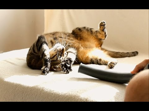 Cats, Vacuum Cleaner & RC Hovercraft