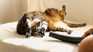 Cats, Vacuum Cleaner & RC Hovercraft