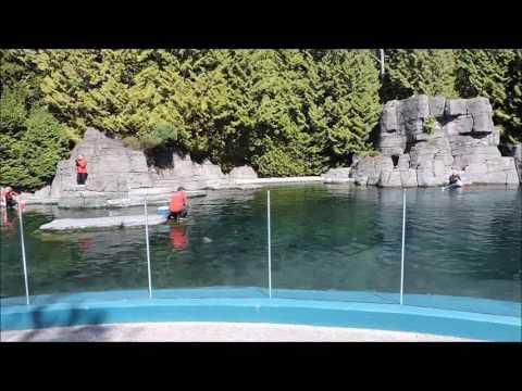 Quest to British Columbia | Vancouver Aquarium | Part 14