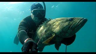 Spearfishing BIG GROUPER January 2020 Подводная охота январь 2020 The BEST fishing in Goa
