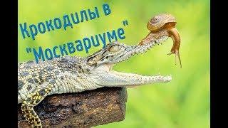 Смотреть видео Крокодилы в Москвариуме в Москве! Или куда сходить с ребенком в Москве. онлайн