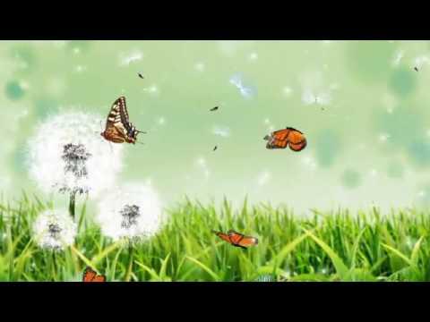 Lagu Minang Lepai Album Takicuah Jando Kayo