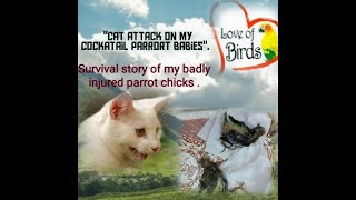 Andquotcat Attack On My Cockatiel Parrot Babiesandquot.with English Subtitles Urdu Andamp Hindi