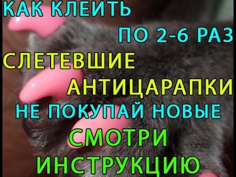 Вопрос: Как сделать антицарапки для кота своими руками?