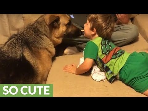 Little boy shares treat with German Shepherd