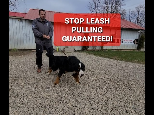 HOW TO STOP LEASH PULLING INSTANTLY!
