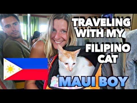 MOST TRAVELING FILIPINO CAT 🇵🇭    MAUI BOY the CAT WANDERER! 😻