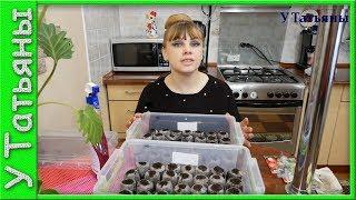 Сажаем ВМЕСТЕ! Посев семян: капусты, томатов, бальзамина, петунии в торфяные таблетки