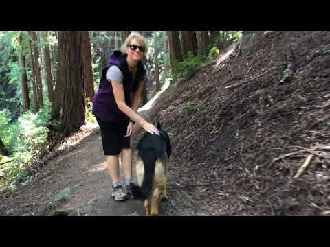 4 CA Hiking with German Shepherd Series Part 4 of 4.5 Hiking with Dog