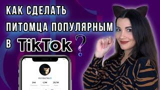 Как стать популярным в ТикТок, если ты животное? Стратегии и секреты продвижения питомцев в TikTok.