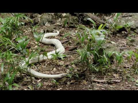 Возвращение на остров Ним - смотри полную версию фильма бесплатно на Megogo.net