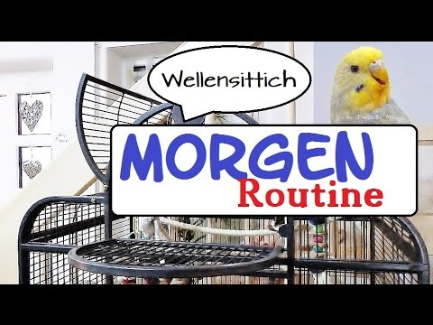 Wellensittich Morgenroutine | ♡ eine Morgen Routine für Wellis ♡