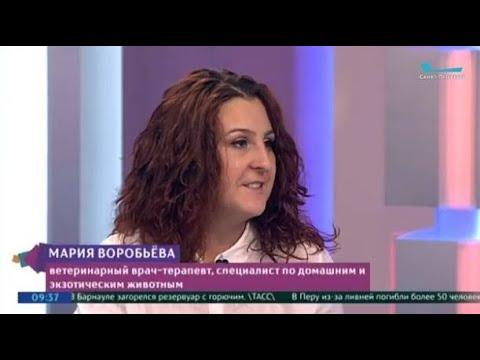 Мария Воробьева на Телеканале Санкт-Петербург — запись от 01.03