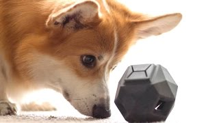7 Amazing Gifts For Dog Lovers