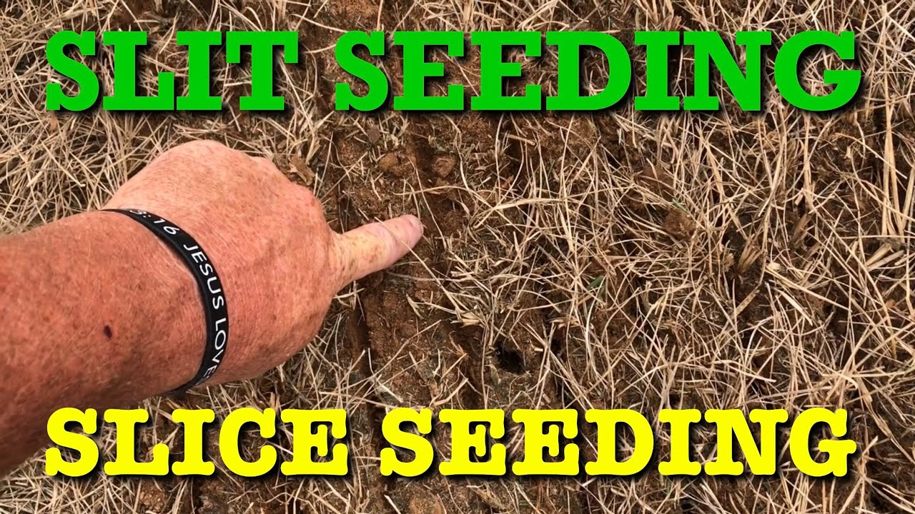 Seeding And Slice A Yard