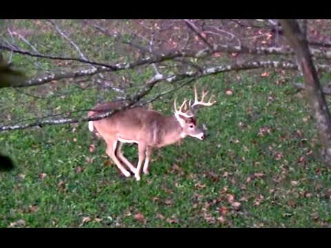 Best Rut Dates, Beating The Lull | Midwest Whitetail from YouTube · Duration:  13 minutes 58 seconds
