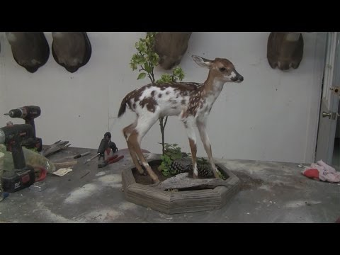 Season 2, Webisode 5 - How To Mount A Full Size Fawn - Part 3
