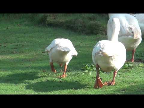 bueatiful svans