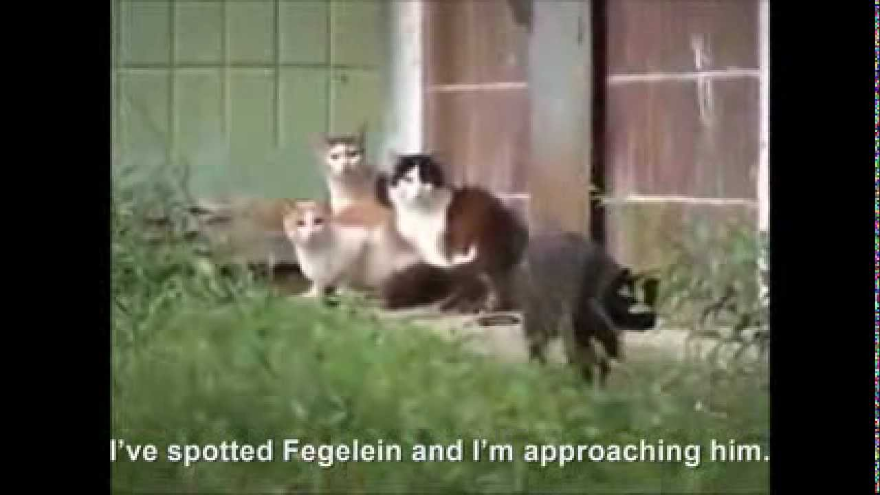 Hitler the Bunker Cats and Fegelrat