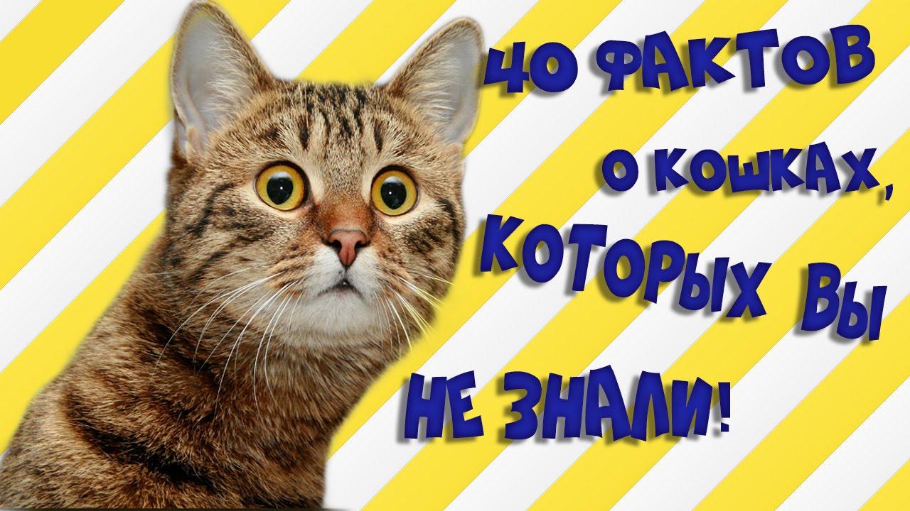 Топ фактов о котах