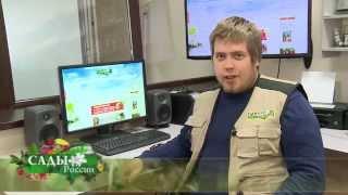 """Регистрация в интернет-магазине НПО """"Сады России"""""""