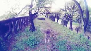 犬と散歩するだけの動画 blog https://goo.gl/wb4BTo.