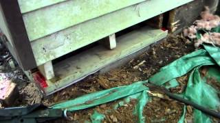 sill plate replacement Front Building pt3