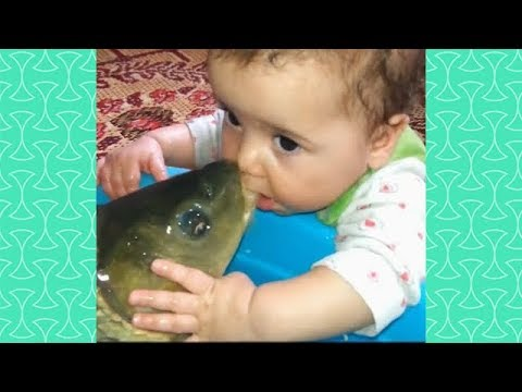 Funny Babies & Kids And Fish Become Friend   Funny Babies And Pets Compilation