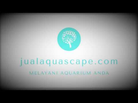 termurah-hub-083857098300-axis-jual-peralatan-perlengkapan-aquarium-aquascape-surabaya