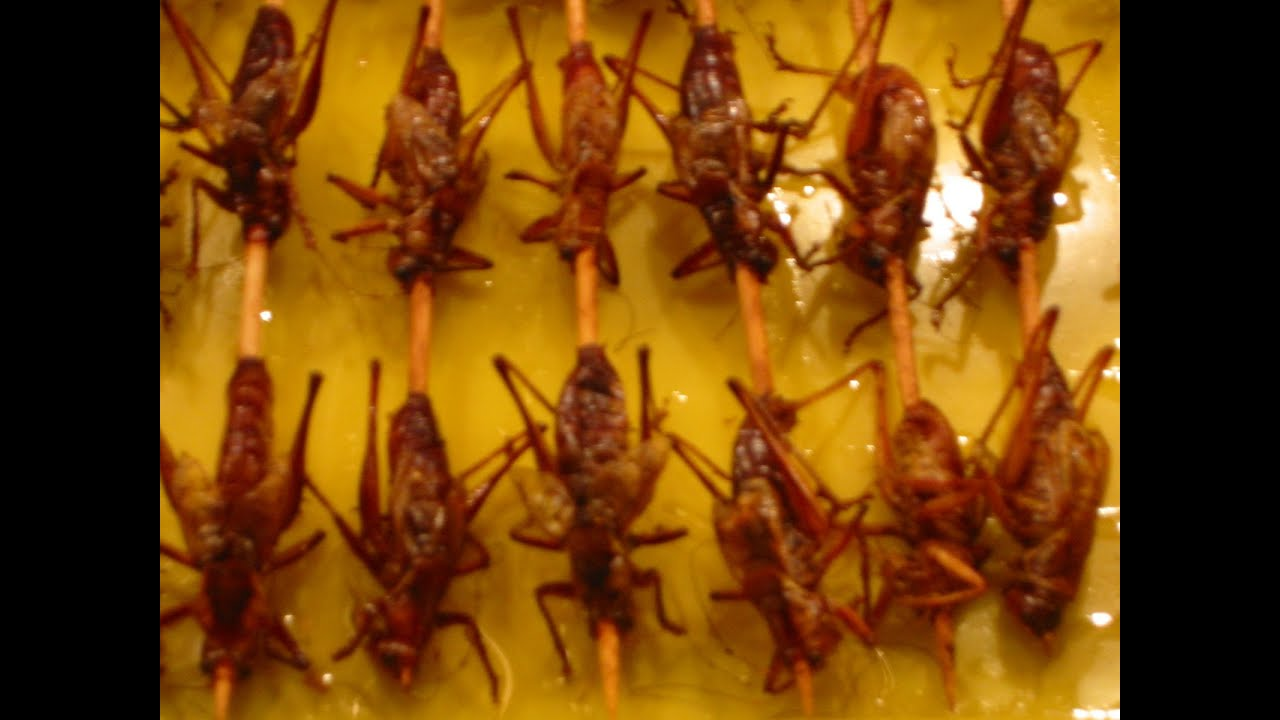 Chinese Insect Food