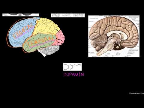 Şizofreni'nin Biyolojik Temeli (Psikoloji...