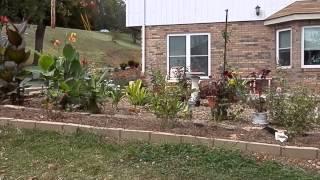 Millys Tennessee Garden