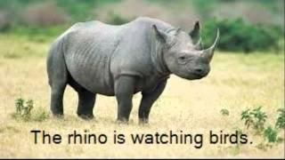 Ethan N: Rhino Thumbnail