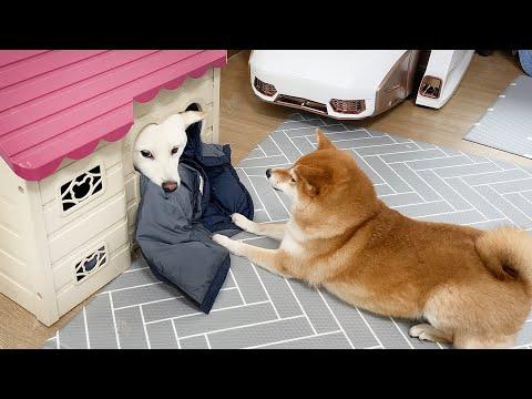 Dog Got Her House Stolen :(      Poor Home Dog Gom