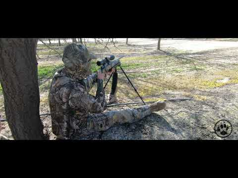 Less Than A Minute Coyote  - CALIFORNIA COYOTE HUNTING