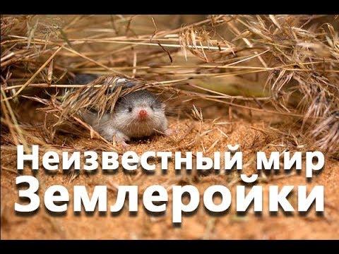 Вопрос: Как бороться с землеройкой в теплице?